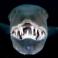 Рисунок профиля (Barracuda)